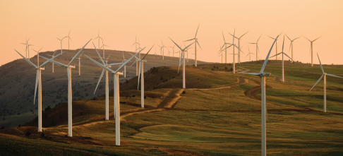 How SA companies can use carbon offsets to pay less carbon tax
