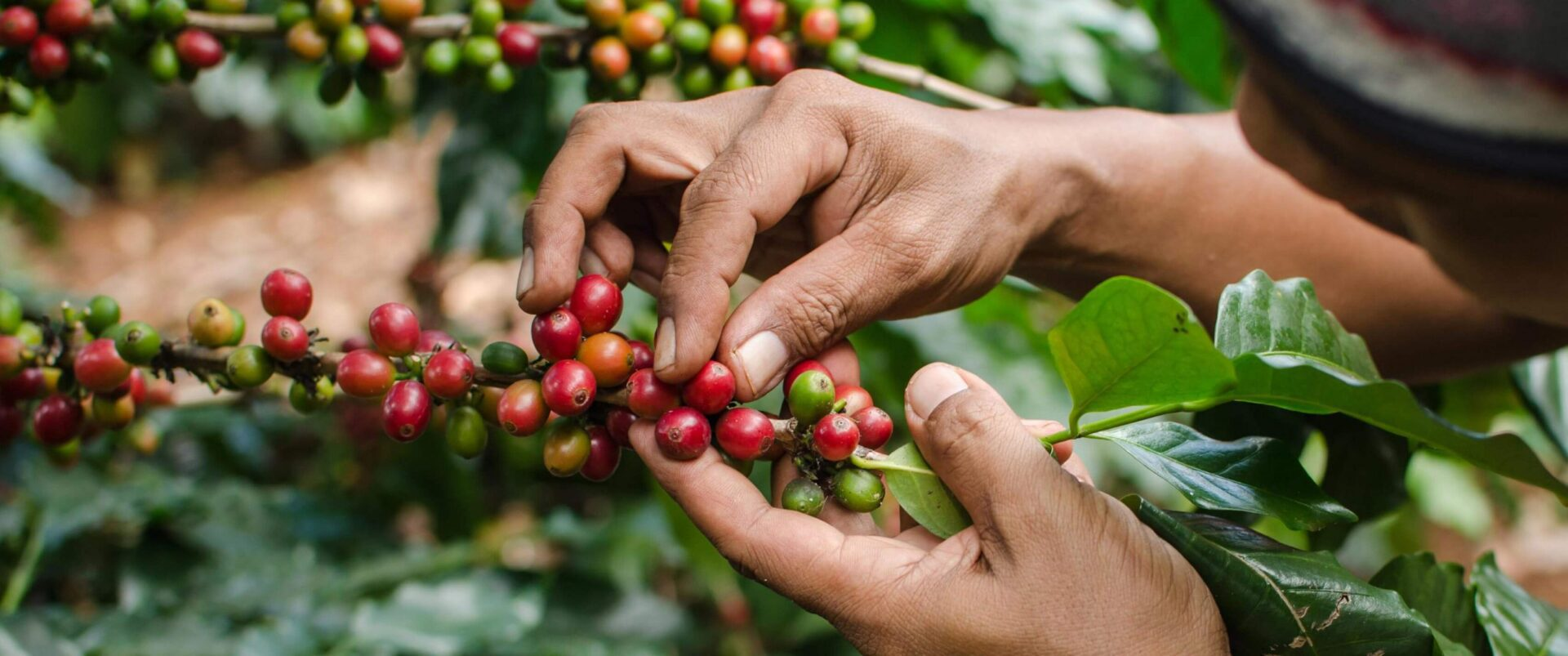 Climate Neutral Group joins the Sustainable Coffee Challenge
