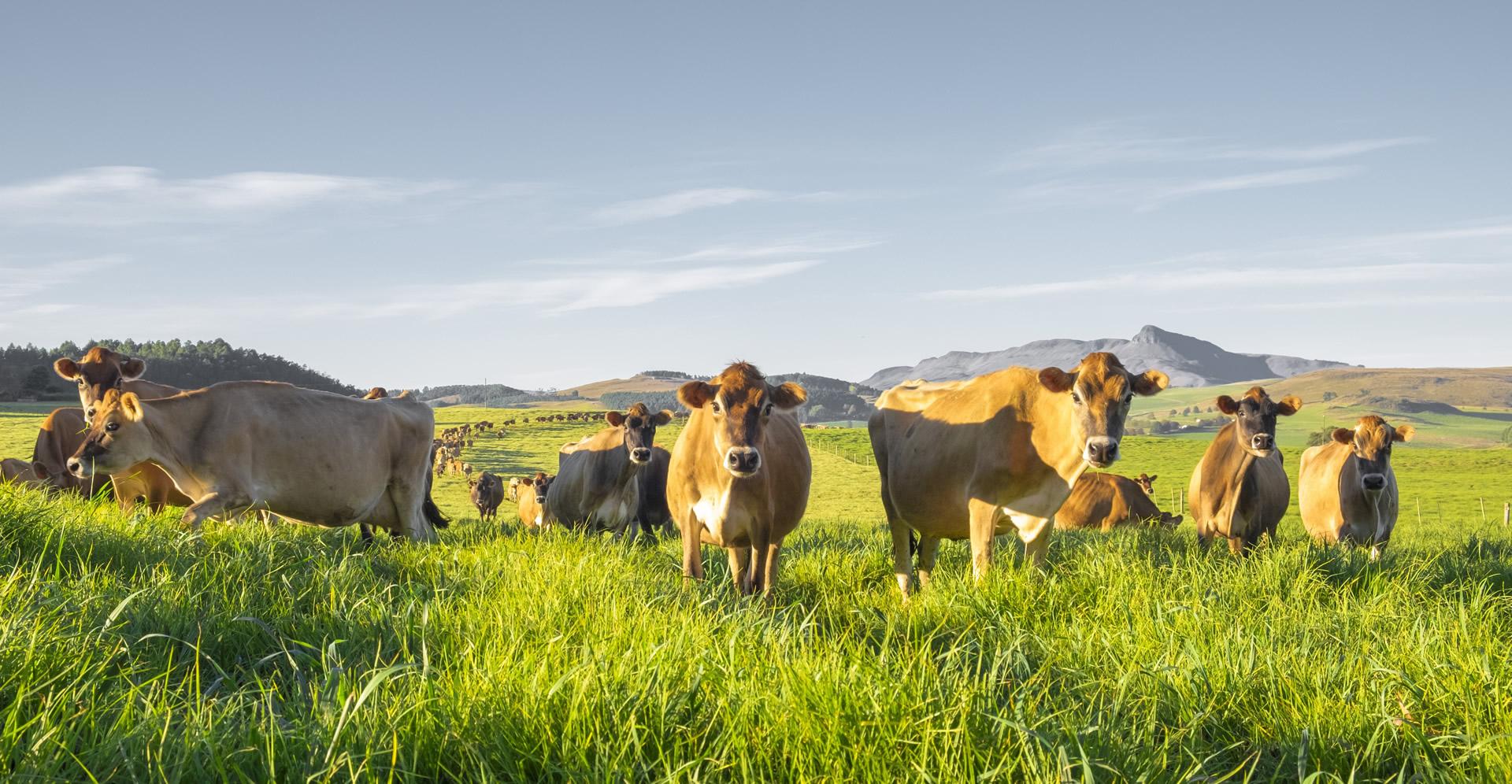 Climate Neutral Group se AgriCarbon-program beloon boere vir herlewingslandboupraktyke